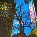 Yale Epstein - Tree 08 - tecnica mista su carta - 30,48 x 30,48 cm